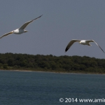 _MG_3206-res