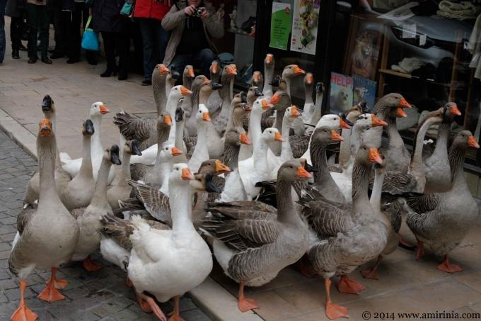 Fest' Oie (Goose Festival – Sarlat)