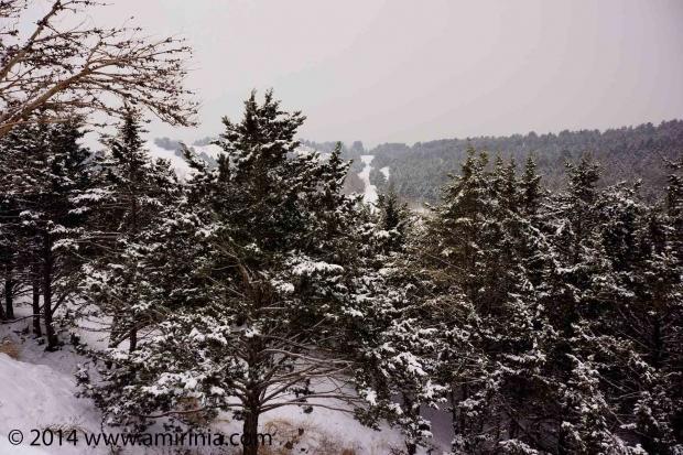 Snow-&-Scenery_004