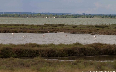 flamingoes – a few amongst thousands