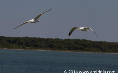 birds of the Camargue