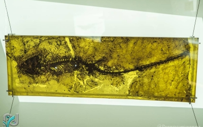 The Messel Pit_020