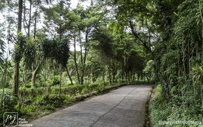 Selva Negra_0039
