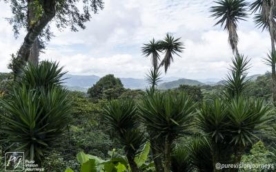 Selva Negra_0044