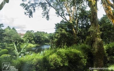 Selva Negra_0045