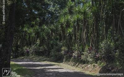 Selva Negra_0075