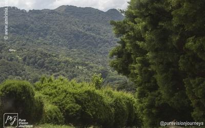 Selva Negra_0076