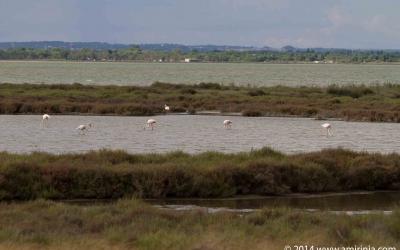 flamingoes – a few amongst thousands