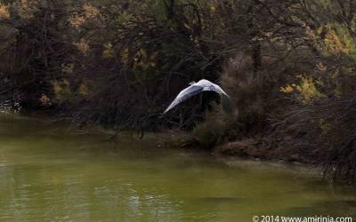 birds of the Camargue