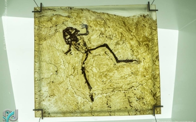 The Messel Pit_013