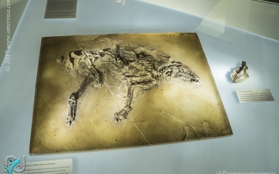 The Messel Pit_015