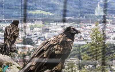 InnsbruckZoo_020