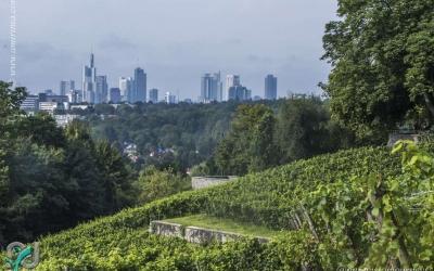 Lohrberg (Frankfurt)_0025