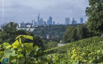 Lohrberg (Frankfurt)_0028